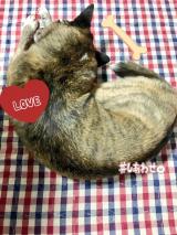 愛犬の理想的な体型をサポート☆【Rhythm】の画像(6枚目)