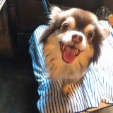 「愛犬の健康のために♡」の画像(1枚目)