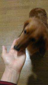 愛犬の理想的な体型をサポートする食事Rhythm(リズム)ヘルシーウェイトの画像(6枚目)
