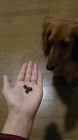 愛犬の理想的な体型をサポートする食事Rhythm(リズム)ヘルシーウェイトの画像(5枚目)