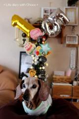 チョコ15歳のお誕生日♪の画像(15枚目)