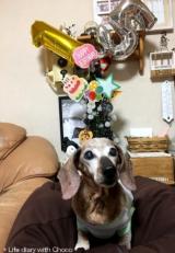 チョコ15歳のお誕生日♪の画像(12枚目)