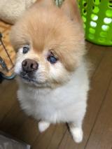鈴 お誕生日おめでとうの画像(1枚目)
