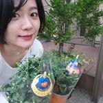 #ガーデニング 日和☀️ #秋 の#花 #ハロウィン に楽しめる#ハロウィンマム 🌼#hakusan_fan#マム 好き!種類は#菊 #キク科 まだつぼみですがたくさん咲いてくれる…のInstagram画像