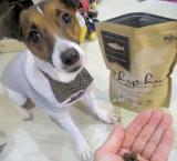 「アレルギーに配慮したお魚の総合栄養【Rhythm(リズム)ヘルシーウェイト】を愛犬に!」の画像(6枚目)