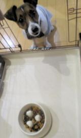 「アレルギーに配慮したお魚の総合栄養【Rhythm(リズム)ヘルシーウェイト】を愛犬に!」の画像(4枚目)