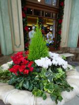 「【USJレポ】ブログ開設2周年&母の遠足USJクリスマスは最高♪」の画像(10枚目)
