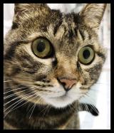 愛猫のケアをピュアイオンミストでやってみたの画像(2枚目)