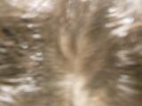 育毛剤\長春毛精/の画像(6枚目)