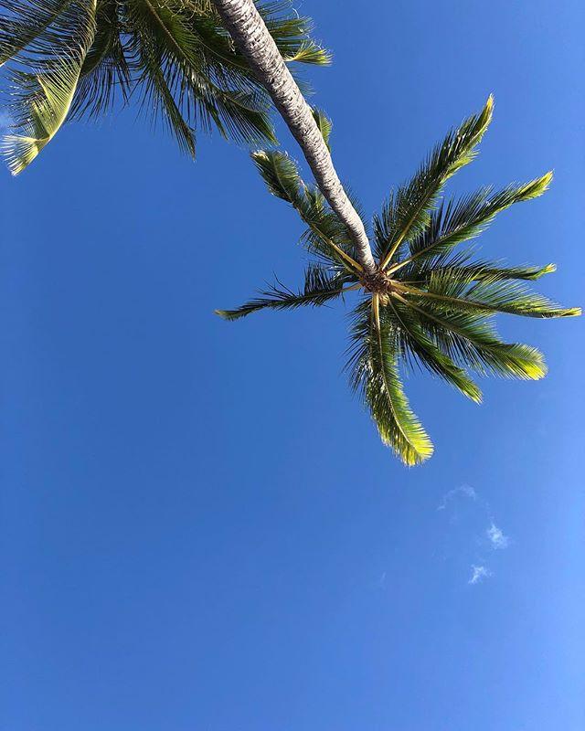 口コミ投稿:今回hawaii前半に宿泊したhilton waikiki beach ホテル🏨.オーシャンビューにグレード…