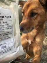 「東栄新薬の【キングアガリクス100ペット用】30粒」の画像(3枚目)