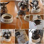 ごはんお試しちうなのら#miniatureschnauzer #dogfood#schnauzers #わんこごはん#ドッグフード #fanima #ファニマル #リズ…のInstagram画像