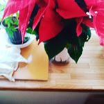 クリスマス気分。#サクシア #植物長持ちサポート #monipla #hakusan_fanのInstagram画像