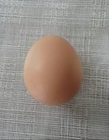 ☆松本ファーム  烏骨鶏の卵☆の画像(9枚目)