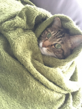 寒がりの猫。