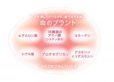 東大との共同研究・高濃度卵殻膜美容液 アルマード チェルラー ブリリオの画像(5枚目)