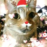 「モニター当選【猫&犬用減塩花かつお】」の画像(2枚目)