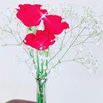クリスマスに👨💼から貰った薔薇がいい香りで毎朝良い気分になる🌹また来年も何かサプライズしてくれるのかな??わくわく。笑#わたしのクリスマス #ひかり味噌 #monipla #hikari…のInstagram画像