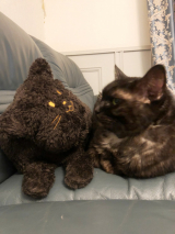「愛猫、老猫の健康にキングアガリクス100」の画像(1枚目)