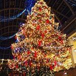 みんなが幸せな年に!#愛の木に願いを #メリーチョコレート #monipla #mary_fan#モニプラ #懸賞 #懸賞好きさんと繋がりたいのInstagram画像