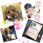 愛犬の理想的な体型をサポートする食事Rhythm(リズム)ヘルシーウェイトを頂きました💖🐶⭐️ 現在の体型を維持をしたい愛犬に。 お魚(サーモン・トラウト)主原料で豊富なオメガ3脂肪酸が愛犬の健やかな…のInstagram画像