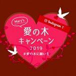 #愛の木に願いを #メリーチョコレート #monipla #mary_fanのInstagram画像