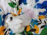 寝相から分かる犬の安眠チェックの画像(4枚目)