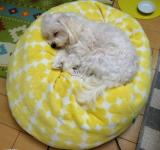寝相から分かる犬の安眠チェックの画像(1枚目)