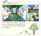 奇跡の木『モリンガ』エキス配合♡シャルレのクレンジングオイルの画像(2枚目)