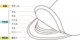 布ナプキンで体は変わるのかの画像(3枚目)