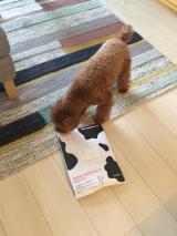 「動物病院専用のペット用サプリの免疫ミルク「ペットアイジージー」」の画像(1枚目)