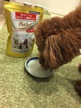 「動物病院専用のペット用サプリの免疫ミルク「ペットアイジージー」」の画像(5枚目)