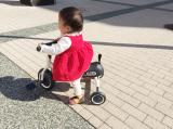 「三輪車デビュー」の画像(1枚目)