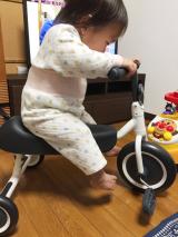 「三輪車デビュー」の画像(12枚目)