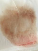さとうきびスクワラン100% 岡田クレンジング 合成界面活性剤無添加ノンケミカルの画像(7枚目)