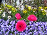 「【USJ】春休み&イースター直前ひとりUSJダイジェスト♡」の画像(12枚目)