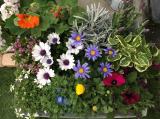 お花いっぱいのベランダ(≧∀≦)モニター中です♪の画像(3枚目)