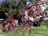 【モニター】桜の花弁当でお花見♪の画像(3枚目)