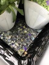 お花いっぱいのベランダ(≧∀≦)モニター中です♪の画像(2枚目)