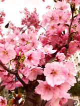 春を感じたい…!の画像(1枚目)