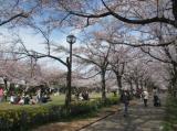 桜・さくらの画像(5枚目)