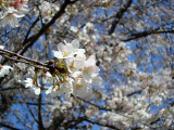お花見と、カラオケ♪の画像(1枚目)