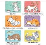 「キングアガリスク100 ペット用 ♡愛猫チャッソにアガリスク♡」の画像(8枚目)