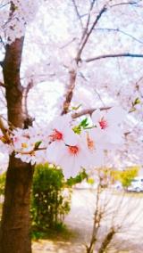 バタバタの春休みの画像(1枚目)
