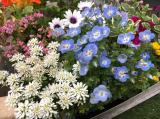 お花いっぱいのベランダ の1ヶ月後の画像(2枚目)