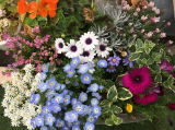 お花いっぱいのベランダ の1ヶ月後の画像(3枚目)