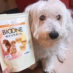 🐩🐩🐩シニア犬🐶今年で14歳です。最近はこのめぐりサポートをごはんにかけて食べています!食欲もモリモリでいい感じです💓#BIOONE #バイオワン #めぐりサポート #inunekosap…のInstagram画像