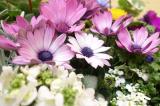 季節のお花 saxia「サクシア」プランツパズル植物長持ち体験モニターの画像(2枚目)