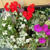 季節のお花 saxia「サクシア」プランツパズル植物長持ち体験モニターの画像(1枚目)