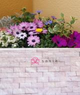 季節のお花 saxia「サクシア」プランツパズル植物長持ち体験モニターの画像(3枚目)